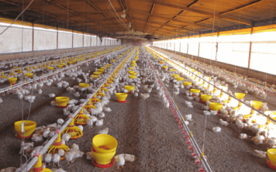 Automation, key to reduce production costs